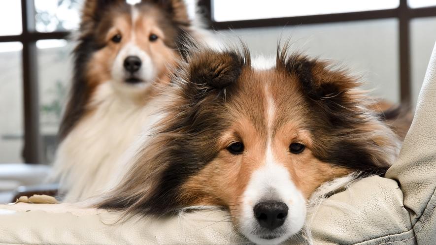 *【看板犬】2匹はとっても仲良し♪