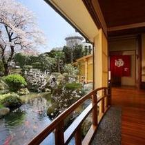 お庭の桜と太鼓橋