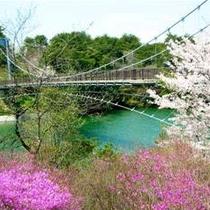 【江汐公園】江汐大橋&つつじ