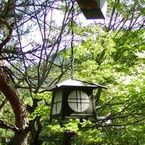 【新緑の山荘の窓辺】