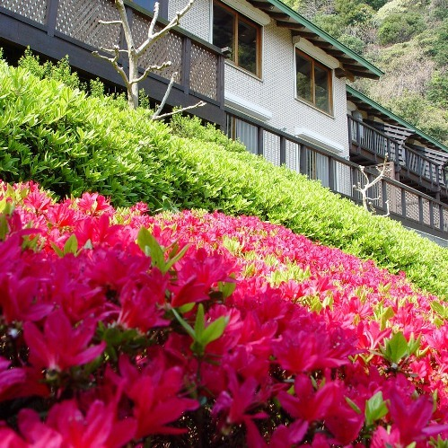 庭園のツツジ(4〜5月頃)
