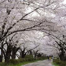 ◆北上展勝地◆『みちのく三大桜名所』に選ばれています。