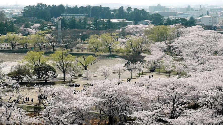 開成山公園 桜 車で10分 徒歩約35分