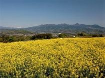 ♦鼻高展望花の丘【写真提供:花の丘】