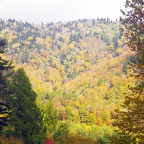 *尾瀬奥利根林道/秋になると、紅葉をご覧頂くことができます。