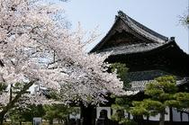 建仁寺(徒歩約10分)祇園・花見小路へも徒歩でアクセス可能です。