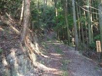 トムソーヤ冒険の森