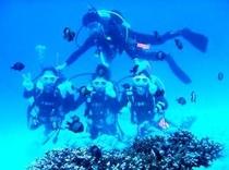 サンゴ礁・熱帯魚満喫体験ダイビングの手配致します8,000円/半日〜。