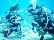沖縄のキレイな海を見てみたい方に、体験ダイビングの手配致します8,000円/半日〜。