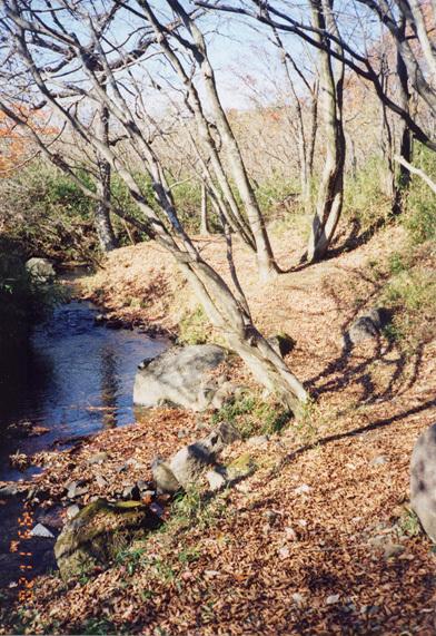 目の前の川です。