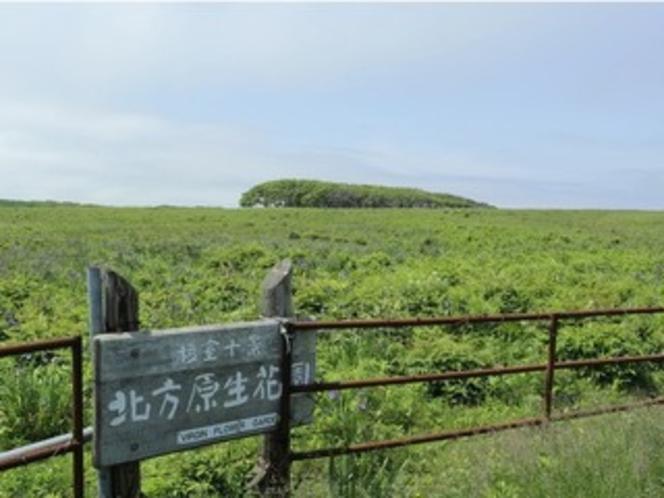 【周辺観光】 北方原生花園