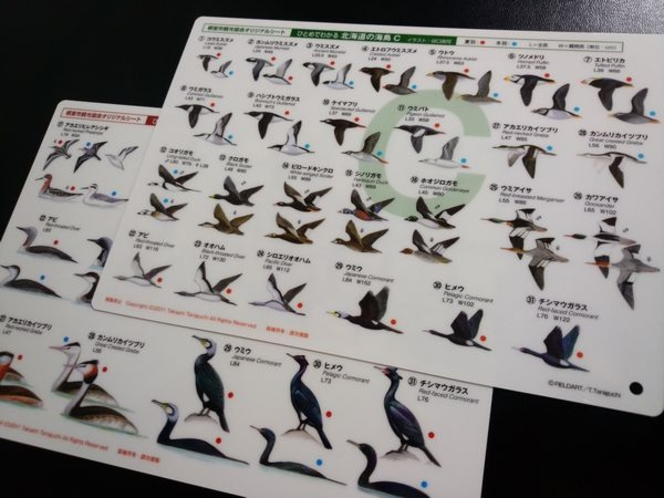 【特典】 海鳥シート