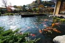 庭園と錦鯉が遊泳する池