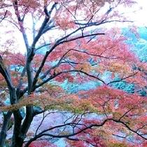 【伊豆の四季】秋の伊豆高原は一碧湖の紅葉はおすすめ。