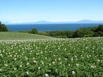 宿前からの風景(ジャガイモ畑)