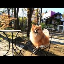 ドックランで椅子に座って日向ぼっこ