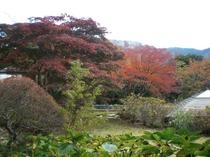 秋には強羅静雲荘からも紅葉が楽しめます