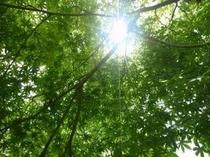 【庭園の風景】新緑 木漏れ日