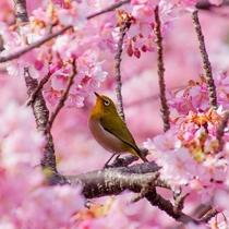 あたみ桜や大寒桜などの早咲きの桜の名所が徒歩数分圏内♪ひとあし早いお花見も楽しめちゃう♪