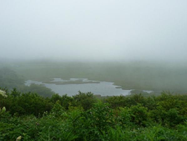 夏の霧に佇む八島ヶ原湿原