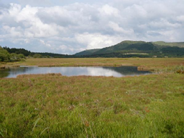 初秋の八島ヶ原湿原