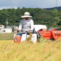 稲刈り 自家製米