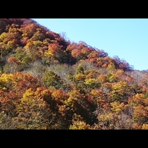 鬼首の山々が赤や黄色に色付きます
