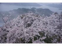 幻想的な積善山三千本桜