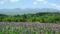 【自然】 5月中旬~ 新緑と那須連山