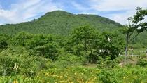 【自然】 6月下旬~7月上旬 沼っ原湿原 ニッコウキスゲ