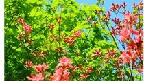 【自然】 5月中旬~下旬 那須高原で広がる新緑