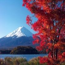紅葉に包まれた富士