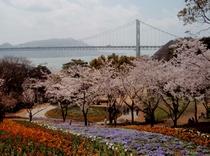 火の山公園からの 関門橋