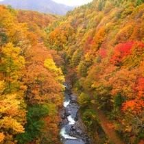 燃える紅葉の中津川渓谷