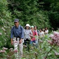 デコ平湿原 花の中を歩く