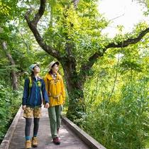 遊歩道(レンゲ沼2)