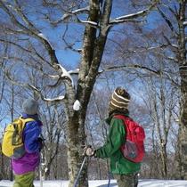 森と桧原湖上のネイチャーツアー