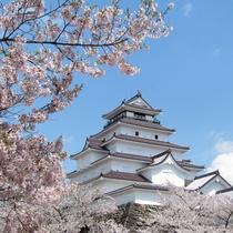 春の鶴ヶ城はお城と桜が一緒に撮影できる春の代表的スポット