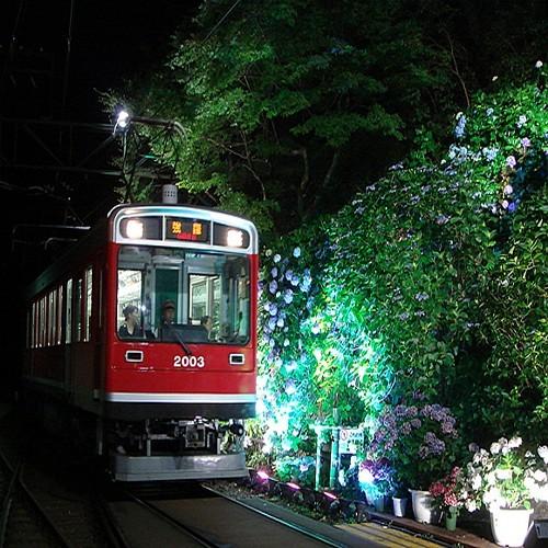 アジサイ電車