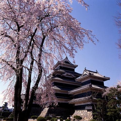 松本周辺の桜の見ごろは例年4月上旬~中旬