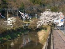滝川と桜と鯉のぼり