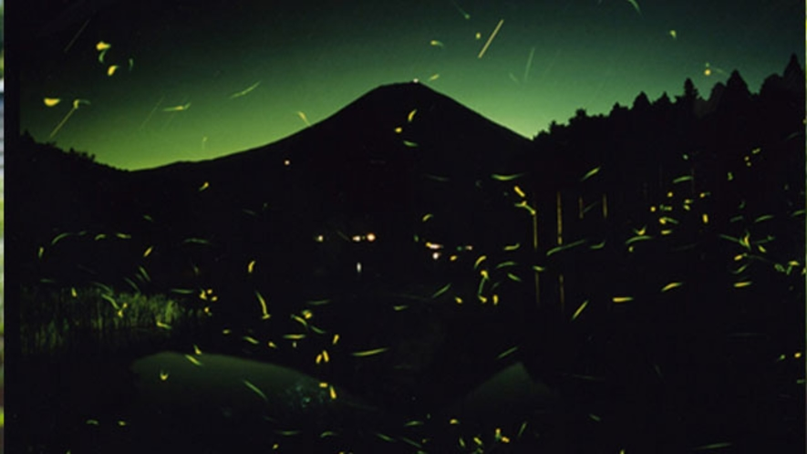 田貫湖と天然蛍