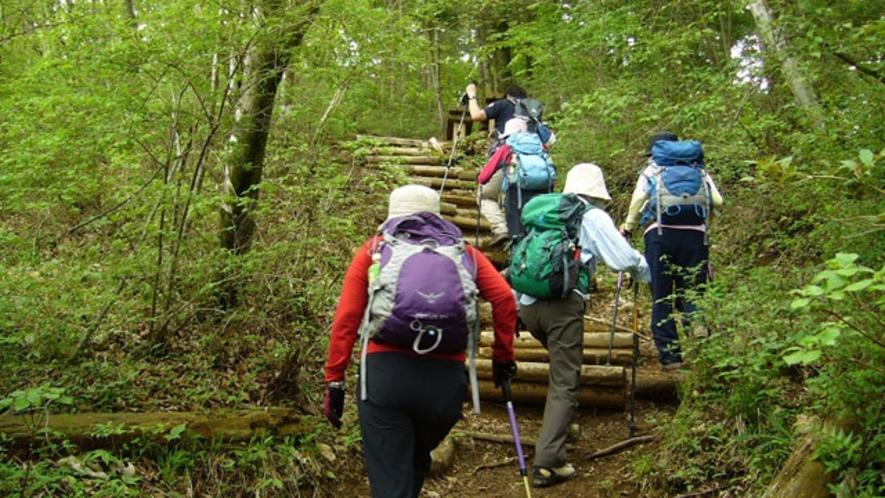 長者ガ岳へのハイキング道(東海自然歩道)