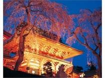 塩竈神社夜桜