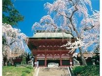 塩竈神社 桜 お車で15分