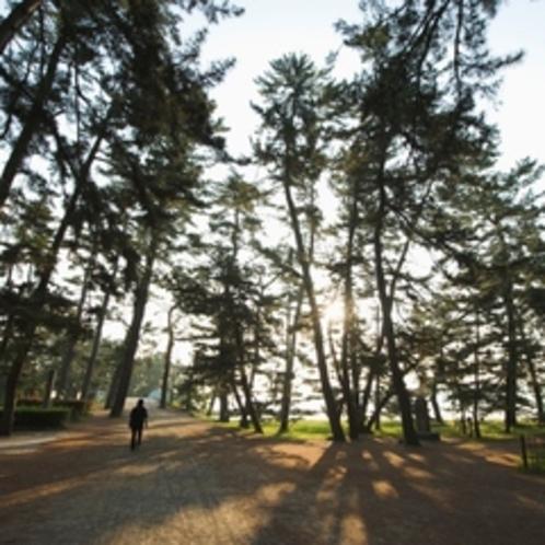 【天橋立松林】約8000本の松林。変わりゆく四季と緑の松林。昔から多くの人に愛されています