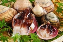 【素材一例】日本一の「とり貝」はじめ、地元で獲れるアサリや岩ガキは夏の人気の味覚です。