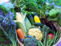 夕食、朝食には旬の会津産野菜が20種以上お楽しみいただけます。