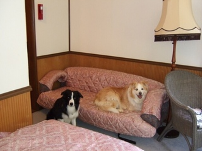 ペット同伴部屋