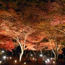 月の石もみじ公園の紅葉ライトアップ(11月中旬〜下旬 美やまからお車で約20分)